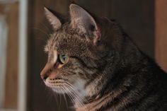 Halley up for adoption at Mid Hudson Animal Aid, Beacon, NY  #adoptme