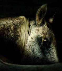 Stunning Horse Photography | Wojtek Kwiatkowski