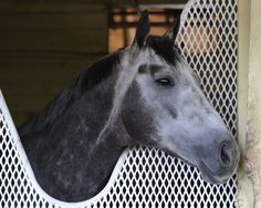 #Frosted Begins Dubai World Cup Prep At Meydan