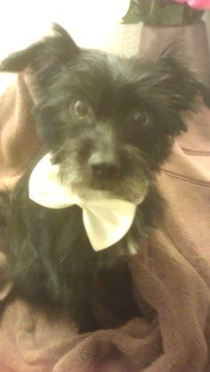 Phoenix Pets Craigslist Everything Norwich Terrier Pets Pet