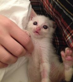Kitten was Dropped Off to Be Euthanized, but They Refused. Now Two Years Later. Funny Animals, Cute Animals, Tiny Kitten, Pet Loss, Cat Boarding, Cat Facts, Entertainment, Cute Animal Pictures, Grumpy Cat