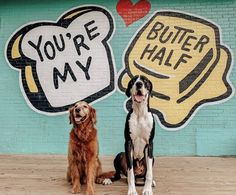 """UNATION StuffToDoInAustin on Instagram: """"Austin, you're our butter half❤️ But instead of butter, this week is looking more like......TEQUILA!! - - - Official Drink of Austin 2019…"""" Texas Pride, Pet Stuff, Tequila, Butter, Drink, Pets, Instagram, Beverage, Drinking"""