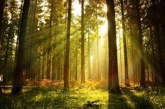 Enchanting Photograph Of Norwegian Woodlands #Nature