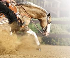 Big Chex To Cash - AQHA Stallion.