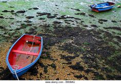 Stranded boats at low tide in Chichester Harbour Emsworth England UK - Stock Image