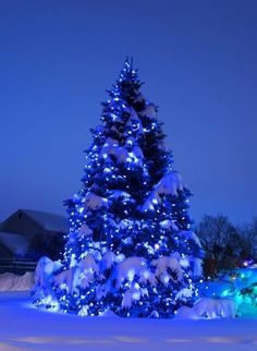 Blue Christmas - Jit