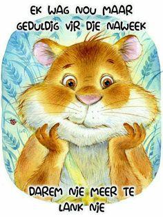 Animal Drawings, Cute Drawings, Illustrations, Illustration Art, Little Critter, Cute Tshirts, Guinea Pigs, Cute Art, Folk Art