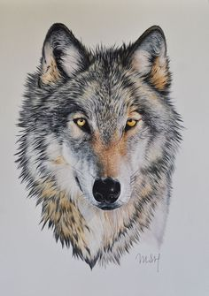 Looks so real! Wolf Tattoos, Animal Tattoos, Tatoos, Beautiful Wolves, Animals Beautiful, Cute Animals, Wolf Tattoo Design, Tattoo Designs, Wolf Spirit