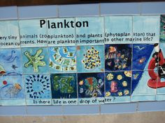 Matthys Elementary in Pasadena ISD. Detail of Plankton Zone Bench Top.  Artist Boat Eco-Art Residency.