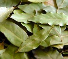 Bobkový list má okrem dochucovania jedál aj ďalšie zdraviu prospešné účinky