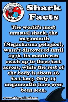 Facts About Sharks Reef Shark, Shark S, Dogfish Shark, Frilled Shark, Jump The Shark, Basking Shark, All Sharks, Shark Facts, Species Of Sharks