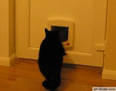 Cat destroys cat flap in bid for freedom | Gif Finder – Find and Share funny animated gifs
