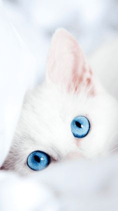 3000+ Wallpaper Android Kucing HD