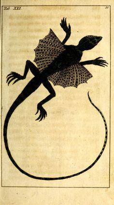 Unterhaltungen aus der Naturgeschichte: Die Amphibien, Vol 3,  Gottlieb Tobias Wilhelm, 1794.