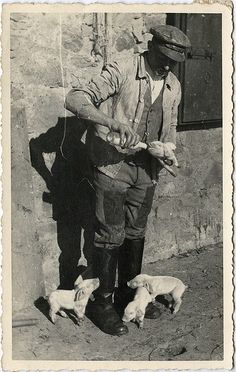 Farmer bottle-feeding a piglet, vintage photo. Antique Photos, Vintage Pictures, Vintage Photographs, Old Pictures, Old Photos, Photo Vintage, Vintage Farm, Farm Animals, Cute Animals