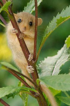 Haben den kleinen Racker in am Waldrand entdeckt ... :-) / Take this photo in the wild life ;-) / See other photo please ...