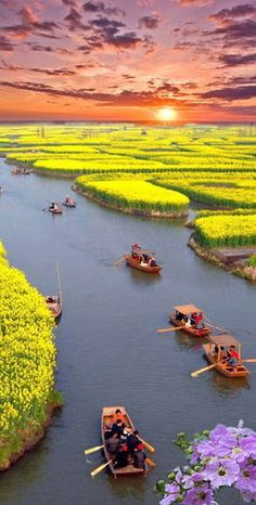 Canola fields in Xinghua CHINA (http://en.directrooms.com/hotels/district/1-12-7481-58321/)