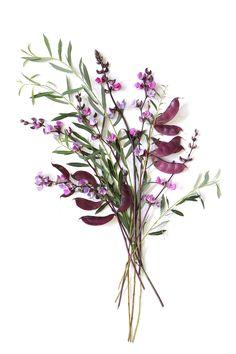 purple hyacinth bean vine   STILL (mary jo hoffman)