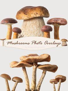 Mushroom overlays mushrooms photo overlays Photoshop