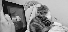 This cat is just so confused by nyan cat. Nyan Cat Video, Kittens Cutest, Cats And Kittens, Cat Watch, Cat Signs, Fat Cats, Cat Gif, Cat Memes, Pet Birds