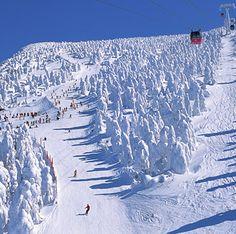 Zao-onsen ski resort, Where you can ski among the Snow Monsters