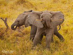 Gli elefanti sono animali affascinanti: impressionano per la loro mole e per la loro forza, ma, nello stesso tempo, per la loro pazienza e bontà d'animo.