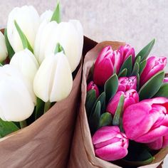 Flowers of the week: white & pink tulips