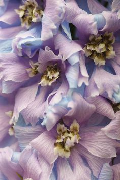 pretty blue and purple petals
