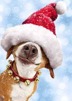 Avanti Christmas Cards, He Sees You When You're Peeking, 10-Count Avanti Press http://www.amazon.com/dp/B00LT4R6LC/ref=cm_sw_r_pi_dp_L.jvwb0WQYTTT