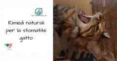 Rimedi naturali stomatite gengivite cane gatto, micoterapia, Coenzimaq10, Ozoral, Zinco, olio di cocco, sangue di drago, omeopatia, gel MUCOADESIVO