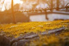 GOLDEN MOSS by SadedisticzGraphix on 500px
