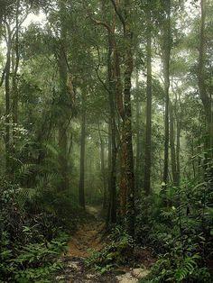 Jungle & mist.... Imagine it at night