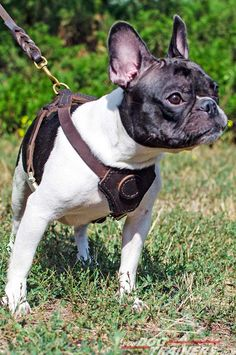 #Leather #Dog #Harness for Puppy Training, Walking or Tracking $49.90 | www.fordogtrainers.com