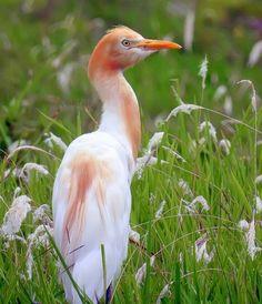 All Birds, Birds Of Prey, Flightless Bird, Herons, Florida Living, Bird Pictures, Flower Photos, Bird Feathers, Ecology