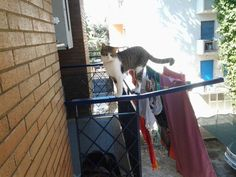 Acrobatic cat