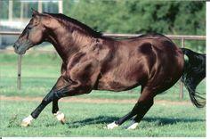 Starlights Wrangler is an 18 year old bay stallion Quarter Horse