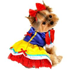 Enchanted snow princess dog costume animals: for my pets маленькие собаки, Cute Dog Costumes, Pet Halloween Costumes, Small Dog Costumes, Halloween Tricks, Halloween 2014, Cat Costumes, Halloween Season, Halloween Ideas, Costume Ideas