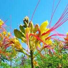 #grosseto #maremma #tuscany #sun #sky #nature #nature_perfection #naturelover #naturephotography #spring #springtime #flower #flowersfoto #flowerslovers #flowerpower #flowershop #flowerporn #igersflowers #instaflowers #colours #coloursflower #yellowflower #20052017 http://gelinshop.com/ipost/1518851342017535078/?code=BUUCz-TlJxm