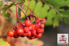 Hotel Schwarzer Adler Nauders am Reschenpass Fruit, Eagle, Black Man, Autumn