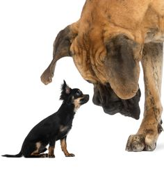 Puppy Search 3: the shape and structure of your dog - The Happy ...