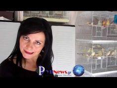 Ελένη Εμμανουήλ: Η γυναίκα εκτροφέας καναρινιών του Δ. Πύλης. 3/11/2018 - YouTube Youtube, Youtubers, Youtube Movies