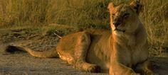 The Girl and the Lioness - a blog post story on awakening: http://memekalifelove.wordpress.com/2014/01/24/the-girl-and-the-lioness/