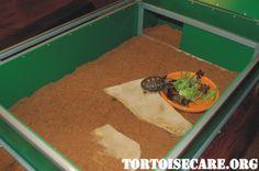 TortoiseCare.org - Tortoise Care Information, Tortoise Housing, Tortoise Keeping, Tortoise Caresheet, Pet Tortoise, Tortoise Care Sheet, Sul...