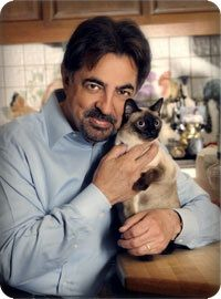 Joe Mantegna - His daughter's Siamese, Juliet, from France where she attended school.