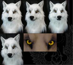 Second white wolf male head by SnowVolkolak.deviantart.com on @DeviantArt