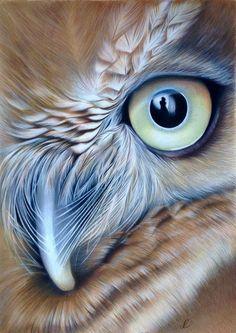 Pastel and Polychromos drawings - drawings / federmomente. Owl Bird, Bird Art, Pet Birds, Owl Photos, Owl Pictures, Beautiful Owl, Animals Beautiful, Owl Artwork, Owl Eyes