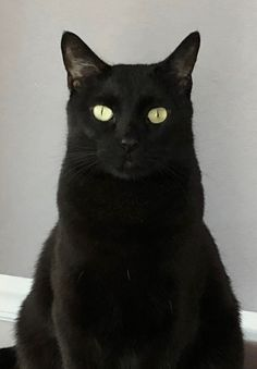 A Black Cat with Golden eyes. Looks like our Pepper, missing a white chest Cats And Kittens, Black Kittens, Kitty Cats, Nine Cat, Animals And Pets, Cute Animals, Cat Names, Animal Totems, Four Legged