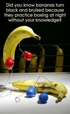 Funny pictures about What bananas do at night. Oh, and cool pics about What bananas do at night. Also, What bananas do at night. Funny Memes, Jokes, It's Funny, Do Homework, Magic Bullet, It Goes On, Funny Photos, Dumb And Dumber, Did You Know