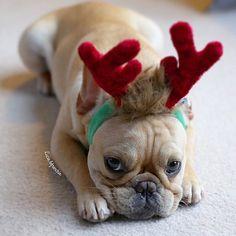 Last Christmas❤️ #lastchristmas#reindeer#christmaspuppy#holiday#cutepets#cutepetclub#frenchbulldog#frenchie#frenchbulldogpuppy#frenchielove#frenchielove_feature#dogfeatures#dogsofinstgram#dailydog#frenchiemagazine#frenchiephotos#theworldofbullies#dogs