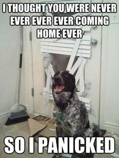 anxious dog funny - I thought you were never ever coming home so i panicked